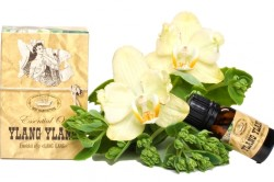 Польза масла иланг-иланг для кожи