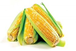 Кукуруза для приготовления маски от морщин