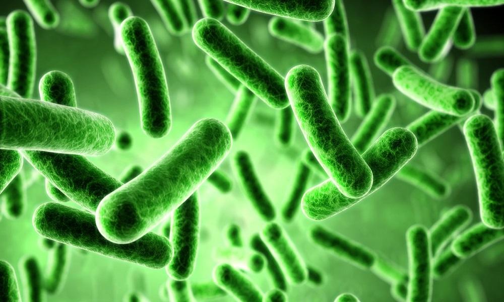 чистка организма от паразитов санаторий
