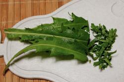 Листья одуванчика для приготовления маски